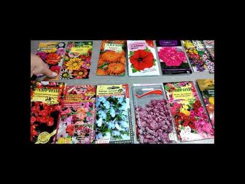 Очень красивые однолетники которые цветут всё лето! Какие цветы посадить???