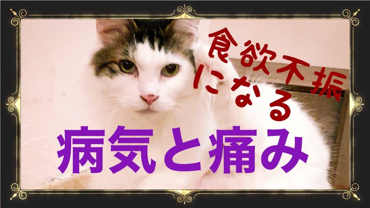 【貓の食欲不振④】貓が食べなくなる疾患と痛みについて ...
