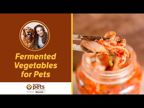 Dr. Becker Discusses Fermented Vegetables For Pets