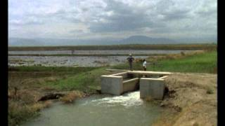 THE GREAT RUAHA RIVER Trailer