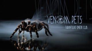 Scorpion and tarantula. Tarantulas Dnepr Club. Sony a6500 shoots