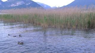 20150530 法國湖區城市Aix Les Bains的Lac d'annecy安錫湖邊營地, Camping le Solitaire du Lac de St Jorioz。0937