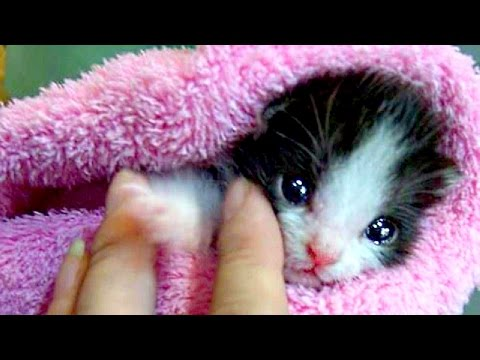 Cute Baby Animal Videos Compilation NEW