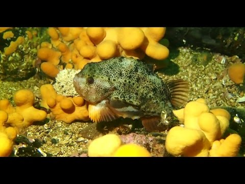 Diving Conservation Bay, Loch Carron -  November 2014