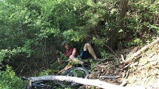 Unlucky Cyclist Crashes Into Tree And Knocks It Down