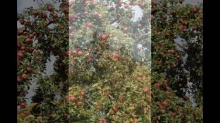 Apple Picking - Markham, Virginia, USA
