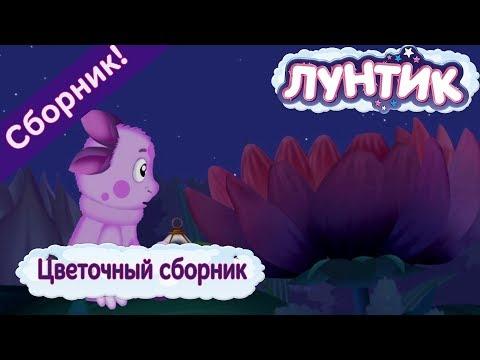 Цветочный сборник 🌼 Лунтик 🌼 Сборник мультфильмов