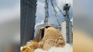 A Tank of Corn Collapses