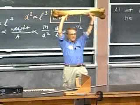 Lecture 01  Powers of Ten   Units   Dimensions   Measurements   Uncertainties   Dimensional Analysis   Scaling Arguments