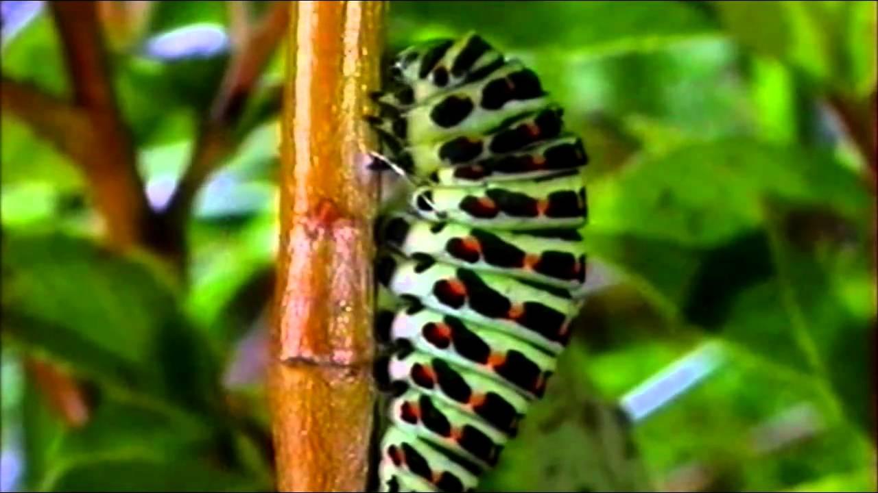 Самые красивые бабочки мира. Топ-5 удивительных мотыльков планеты