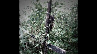 森の地面に突き刺さった逆さまの十字架。09年4月に、この下から4人の少...