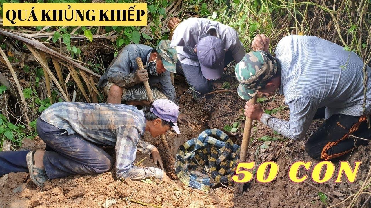 Đi Lạc Vào Khu Rừng Có hơn 50 con Rắn Cực Độc Lớn Nhỏ Nhiều Khoan NHiều Trứng| Săn Bắt TV