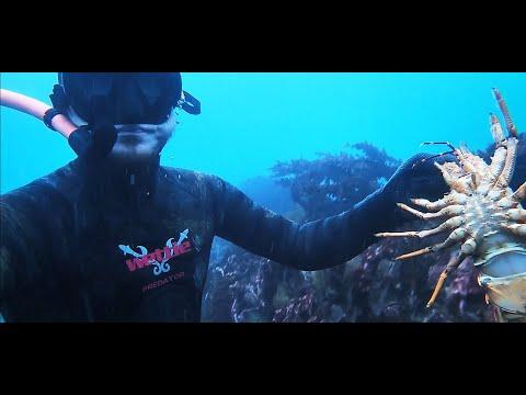 Crayfish Dive! Banks Peninsula Vlog #3