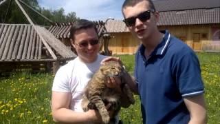 Довольный кот после Витамина Смеха!