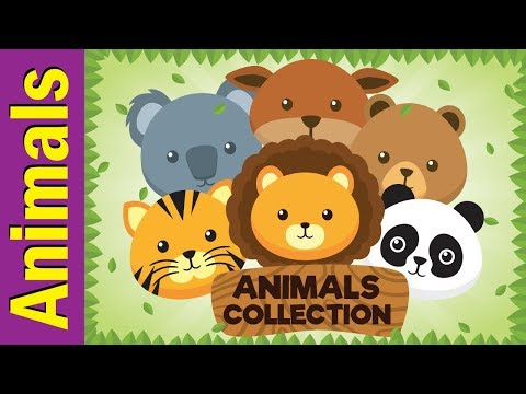 Animals Collection : Pets, Sea Animals, African Animals + More!   ESL for Kids   Fun Kids English