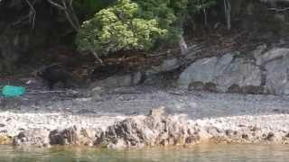 2014  年  4  月  23  日、    8:45:54 三重県方座浦の筏にて釣り中、向...