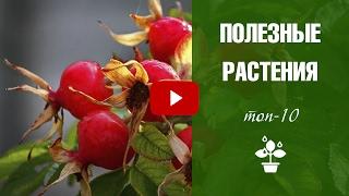 видео полезные растения