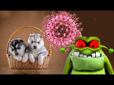 ЩЕНЯТА, ВИРУС, КАМНЕЕЖКА!! (Хаски Бублик) Говорящая собака Mister Booble