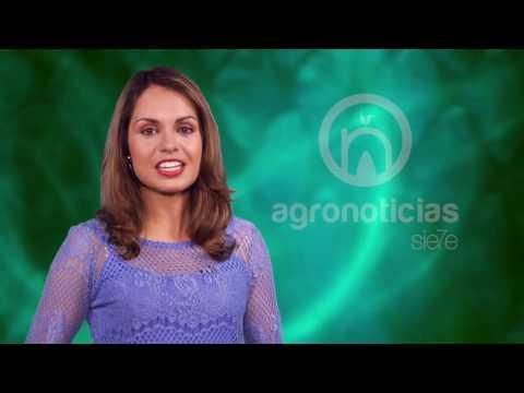 AGRONOTICIAS sie7e PROGRAMA 10