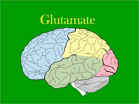 EMP Neuroscience: Glutamate