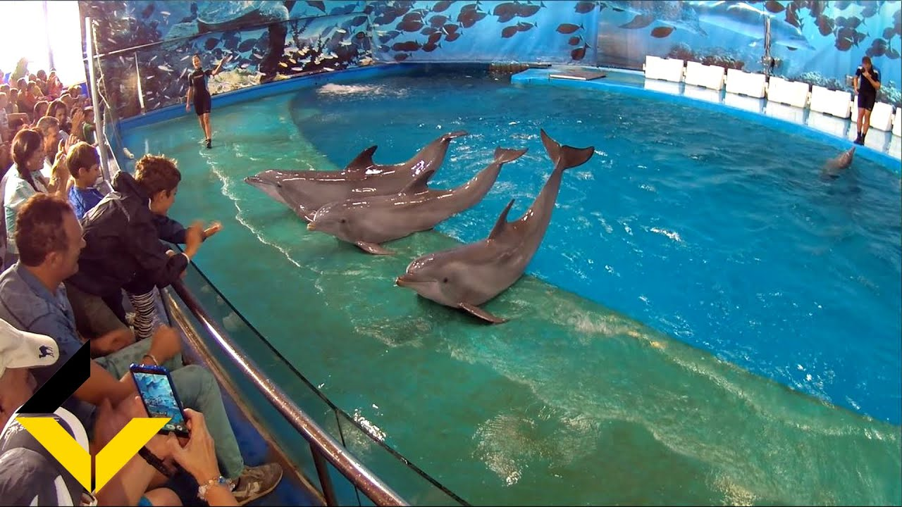 dophin show