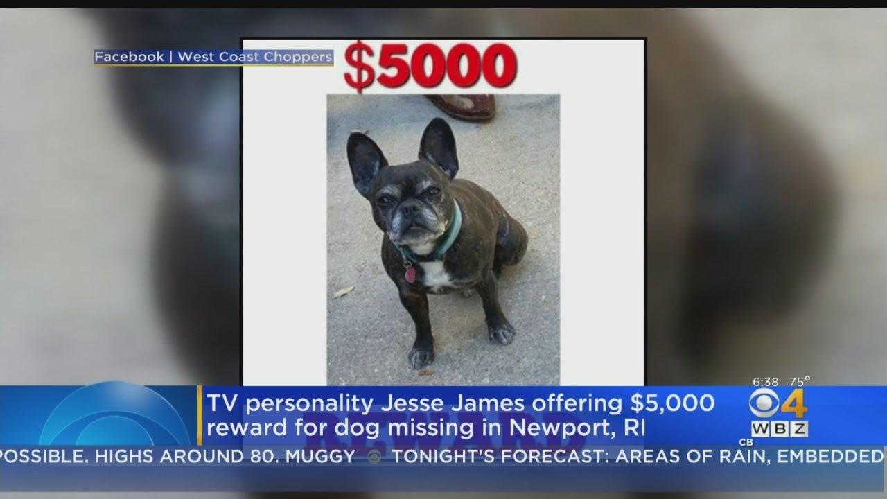 jesse james offering $5,000 reward for dog missing in newport
