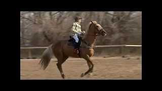 Открытый чемпионат и первенство Уссурийска по конному спорту