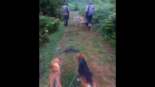 охота на шакала(, 2014-07-06T19:32:47.000Z)