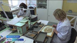 В помощь садоводам: специалисты Россельхознадзора Башкирии проверяют качество почвы и семян