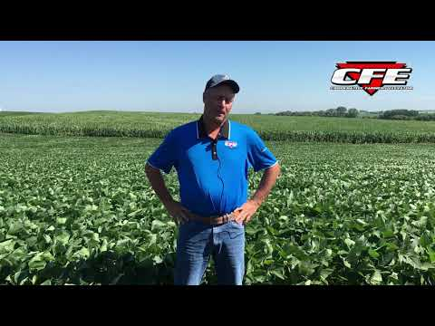 What's up with Soybeans?