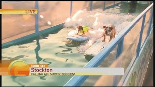Surfin' Dog Auditions