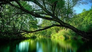 أخبار عالمية - #العالم يحتفي بالغابات في يومها العالمي