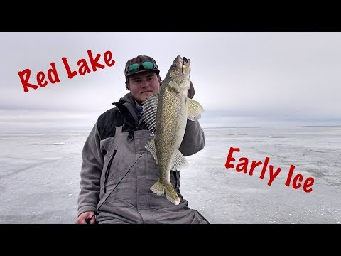 Pre-Thanksgiving RED LAKE Walleyes - Early Ice