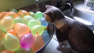 Кот и водяные шарики