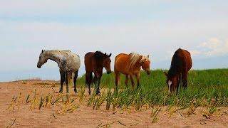 #2124. Лошади (В мире животных)