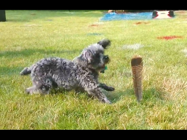 """Dogs vs. Feathers Compilation"" 