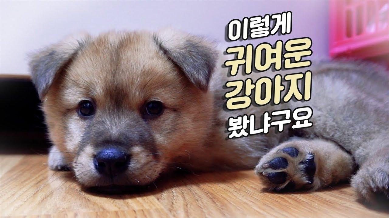 강아지 빵디 댕청미가 넘친다⭐ 귀엽기엽 왕구엽 | 빵디월드#8🐶
