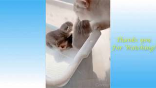 Cute Dogs Cats And Pets Funny Animals Compilation