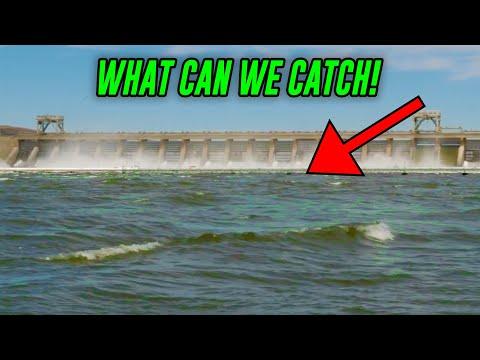 Fishing MASSIVE Spillway - Multi Species River ADVENTURE!