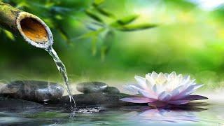[Si Escucha 5 Min] Relájate Con Los Sonidos Del Agua, Poder del Cerebro, Estimular la Creatividad 12