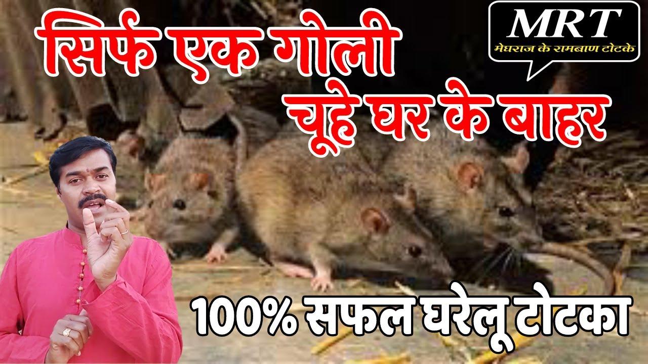 चूहे भगाने का आसान घरेलू तरीका_100% सफल चमत्कारिक उपाय_मेघराज के रामबाण टोटके