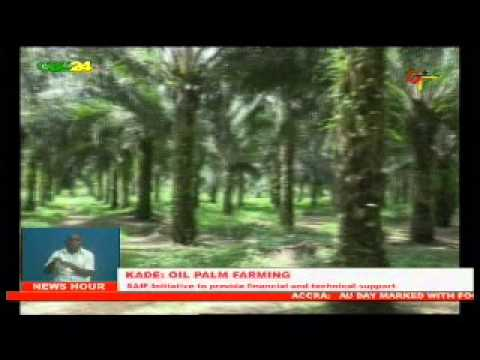 Ghana: Oil Palm Farming