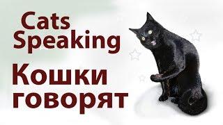 Кошки говорят