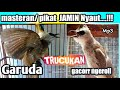 Suara Burung Trucuk Gacor Ngerol Bikin Trucukan Garuda  Mp3 - Mp4 Download