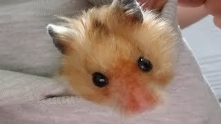 I filmed my hamster for 40 minutes to please you people