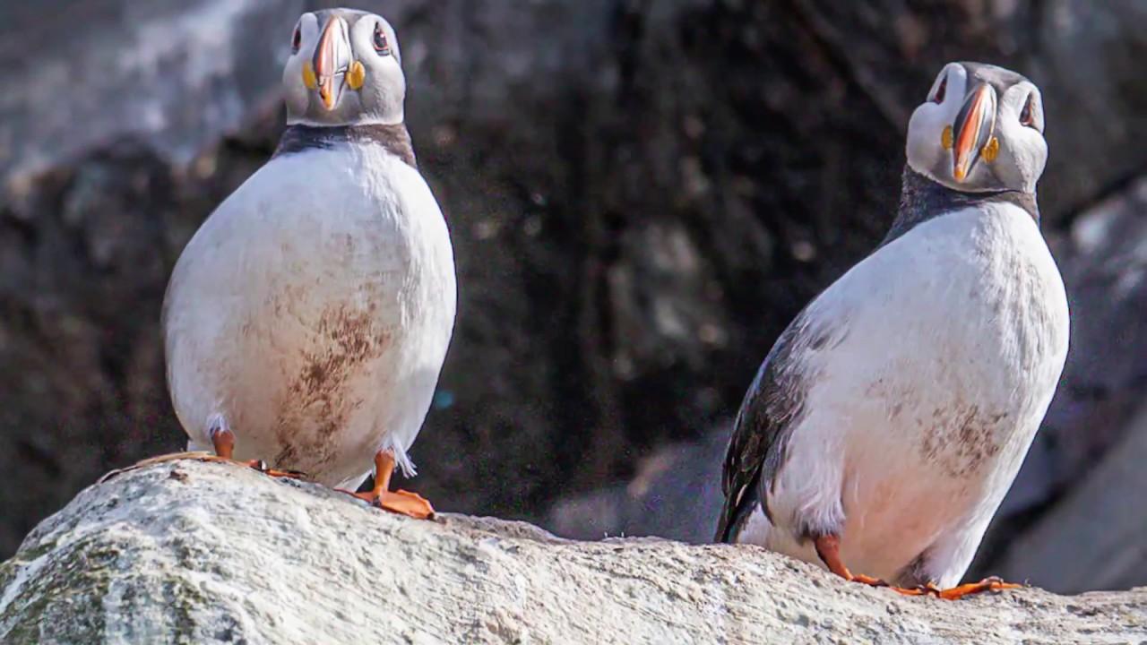 El paraíso de las aves marinas -  Hornøya - Varanger