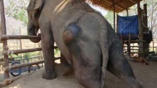 Elephant Nature Park- Jem Jan
