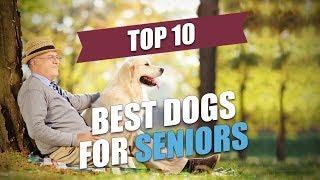 Top 10 Best Dogs for Seniors