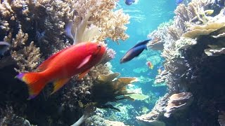 Meditation Relaxation - Caribbean Sea Aquarium  Tropical Fishes - Relax