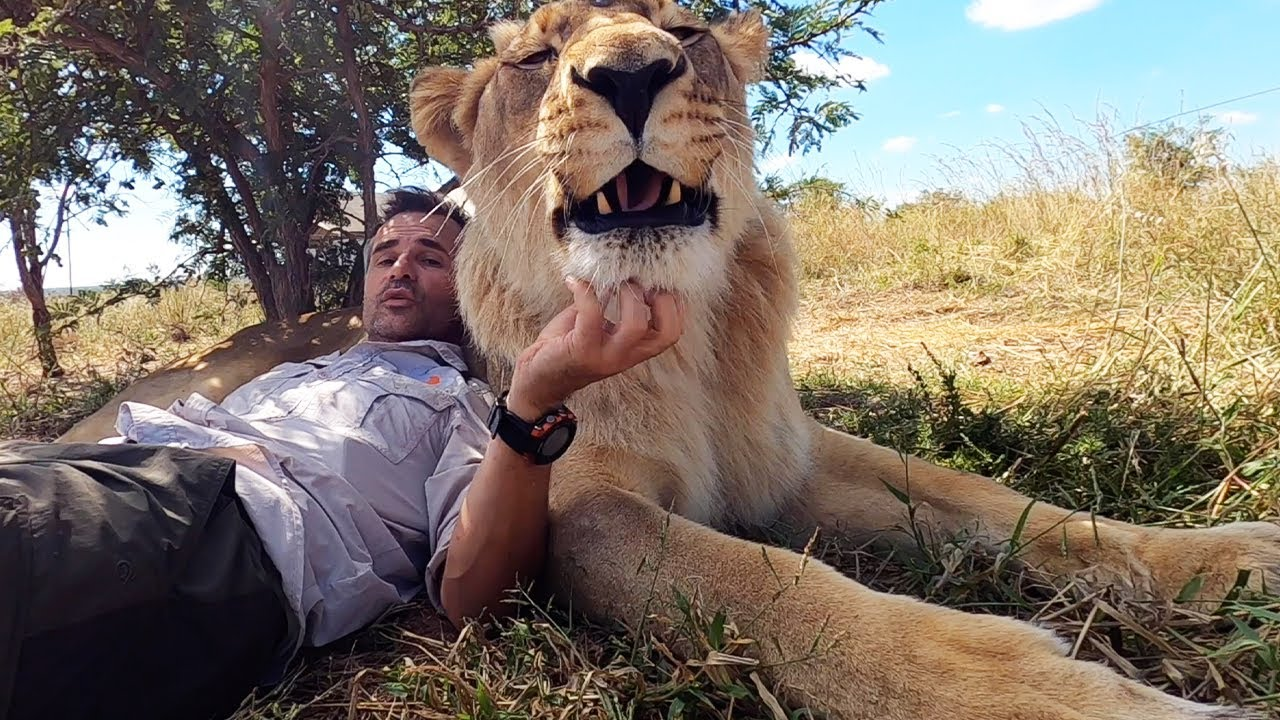 Lion Manes, Wild Lion Population and Kevin's Unique Bond with #AskMeg | The Lion Whisperer